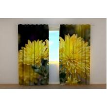 Фотошторы Желтые хризантемы