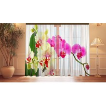 Фотошторы Ассорти орхидей 2