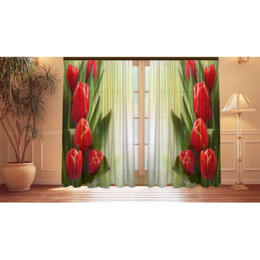 Фотошторы Бутоны тюльпанов