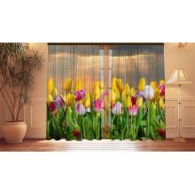 Фотошторы Утренние тюльпаны