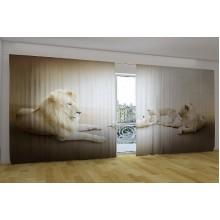 Панорама Белые львы
